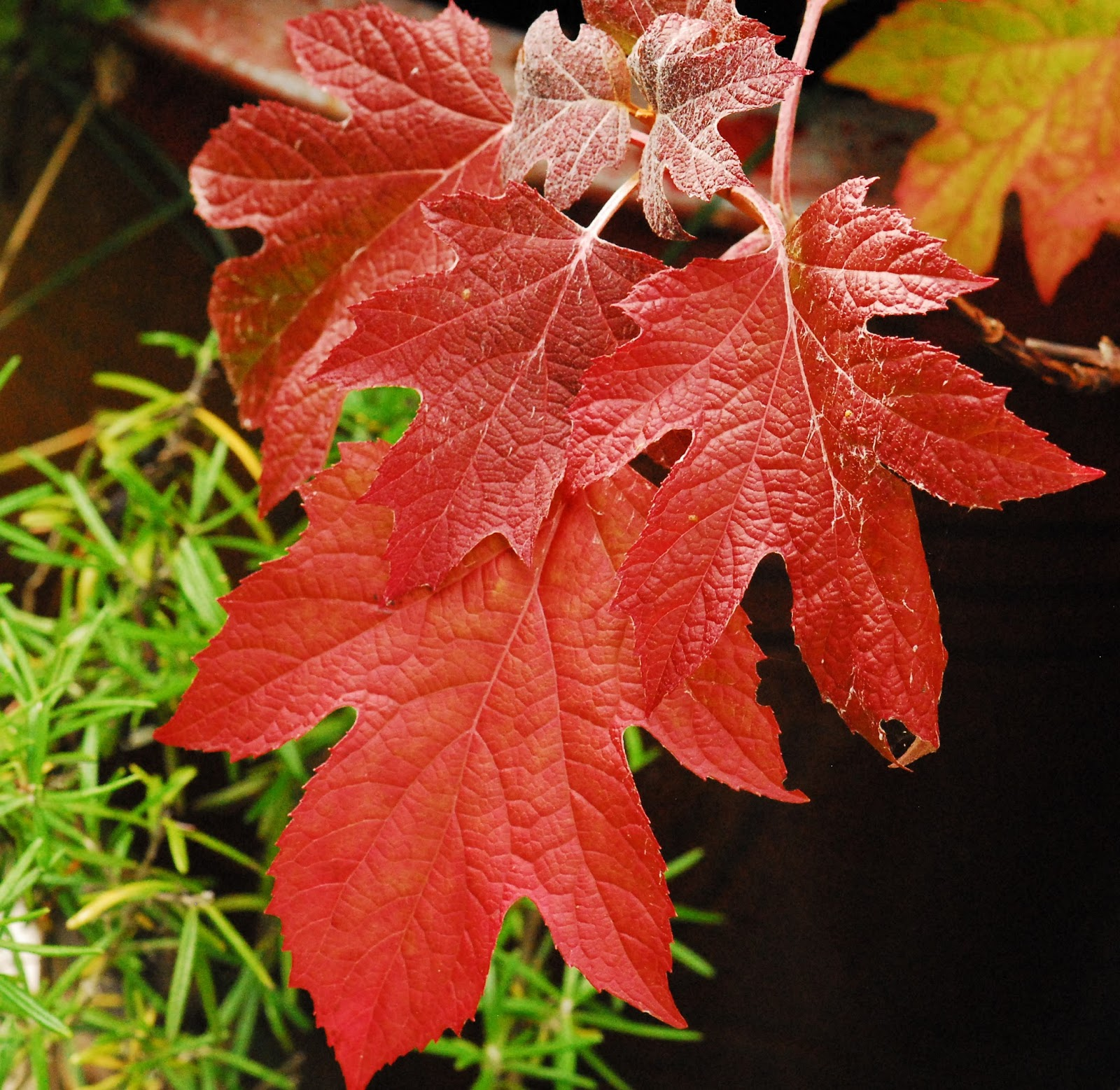 Photos Fall Foliage Shoreline Area News