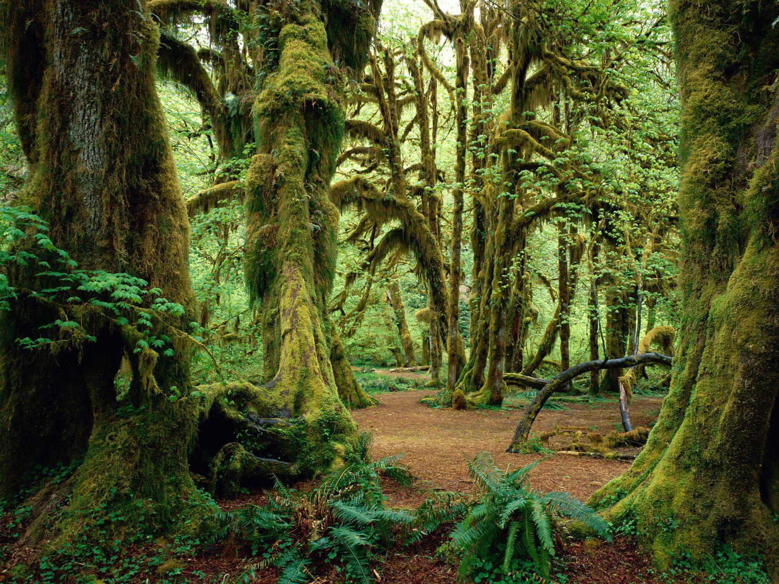 Beautiful Rainforest Backgrounds