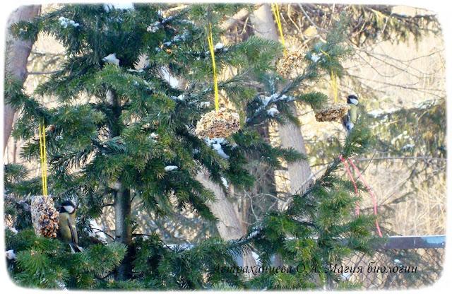 зерновые-пряники-для-птиц-синицы
