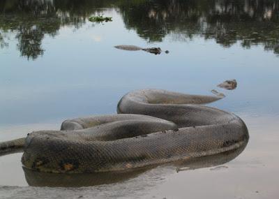 Cazador de serpientes serpiente por la vagina - 2 part 9