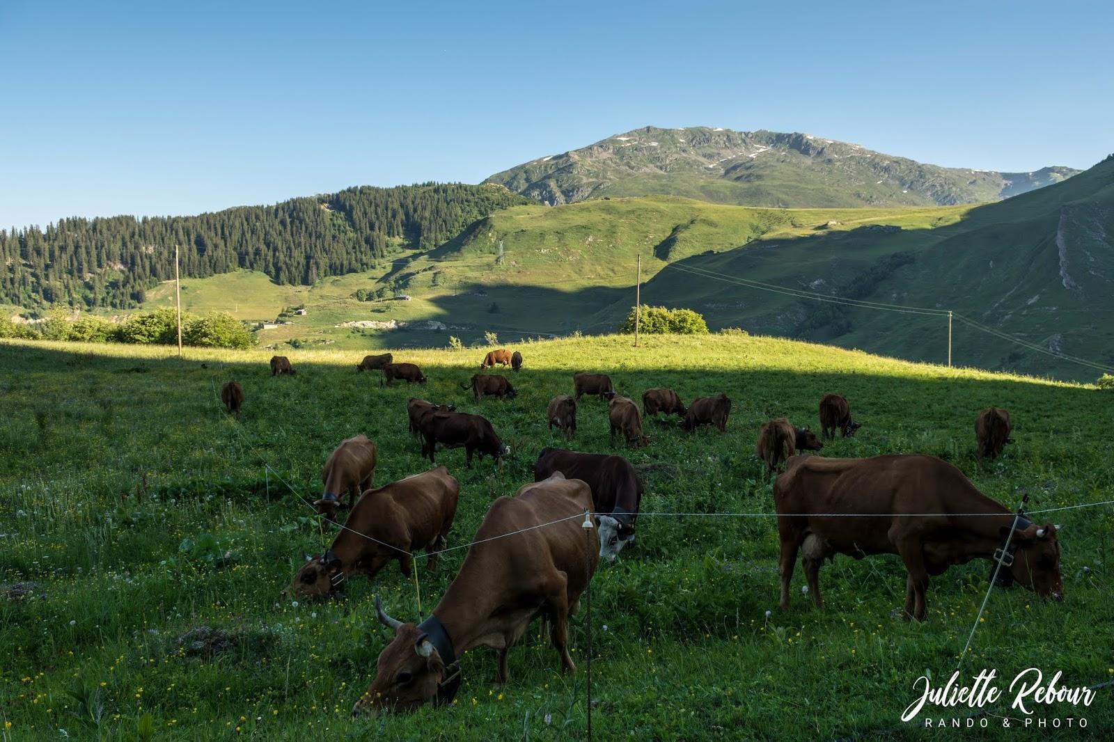 Alpage de tarines au lac de roselend