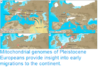 http://sciencythoughts.blogspot.com/2016/04/mitochondrial-genomes-of-pleistocene.html
