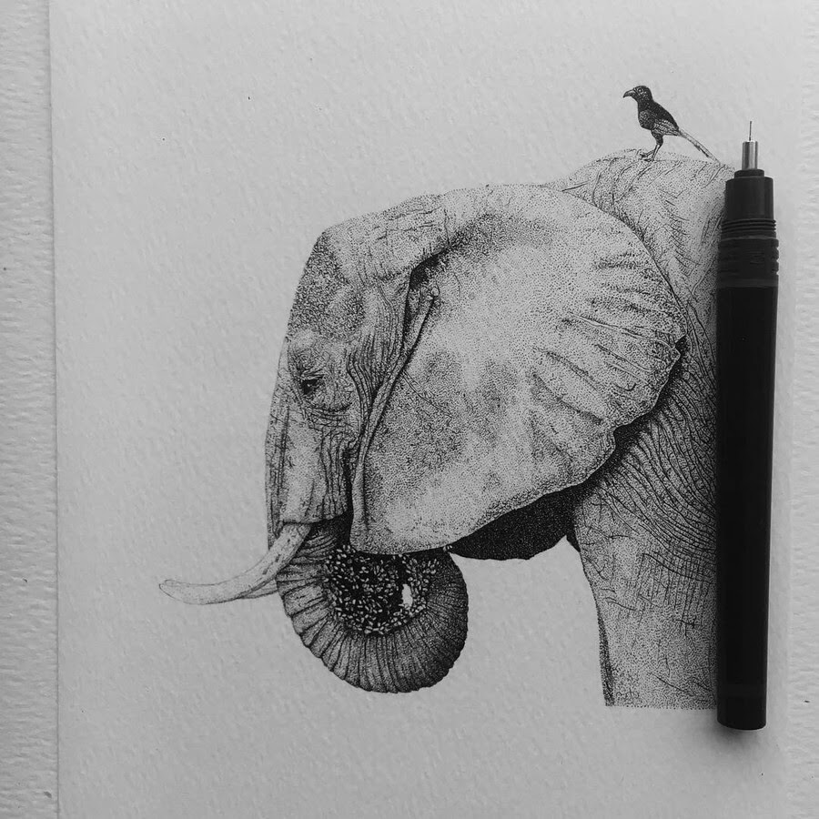 12-The-elephant-Paige-Bates-www-designstack-co