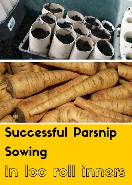 Green Rosie Life - growing parsnips in loo roll inners