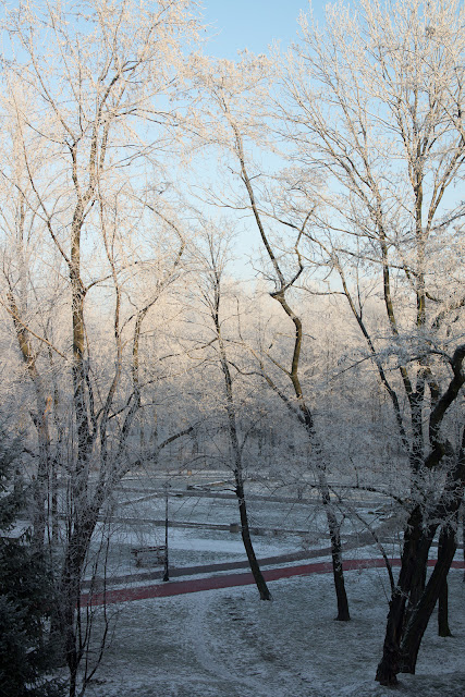 Widok z okna. Park zimą. Ruda Śląska, Nowy Bytom. Krajobraz. Nic ciekawego. fot. Łukasz Cyrus