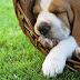 Η υπογλυκαιμία στο σκύλο!....
