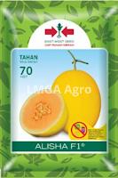 benih melon alisha,melon alisha,budidaya melon,benih melon,lmga agro