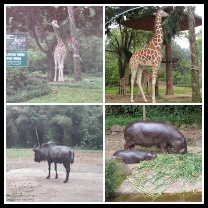 Taman Safari Indonesia 7