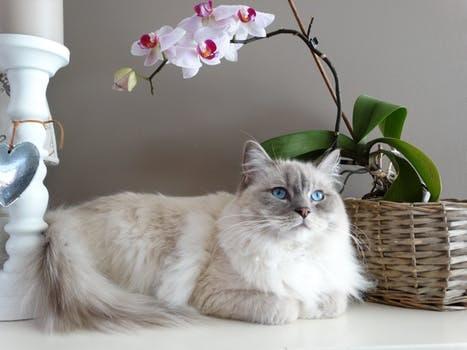 Breeding Cat