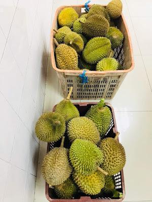 Makan Santai Durian Pelbagai Jenis Di Pejabat Bersama Rakan Sekerja