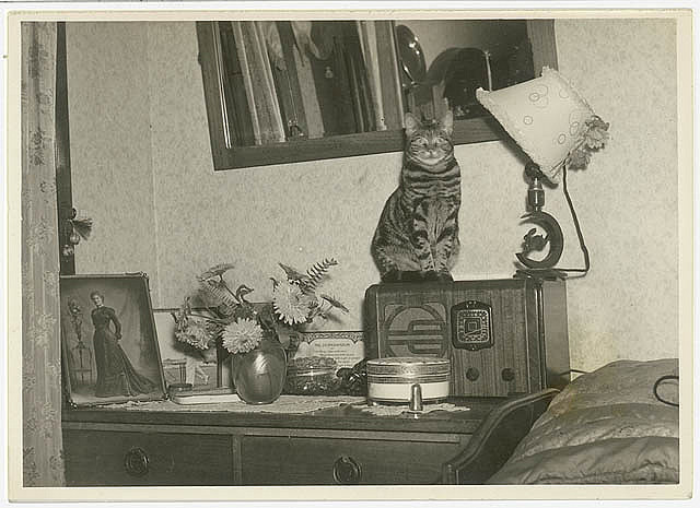 Cat sitting on a radio, 1930s, Sydney, by Sam Hood