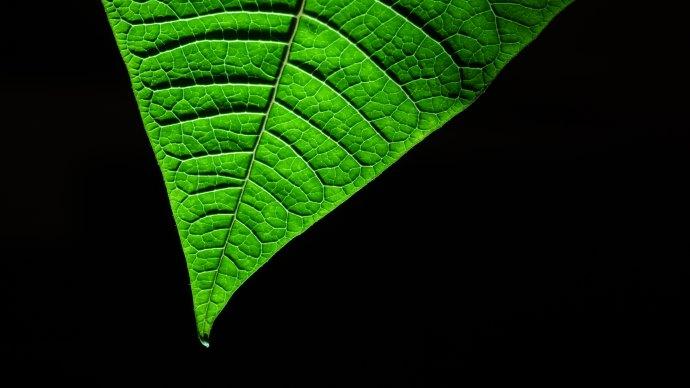 Wallpaper: Grean Leaf