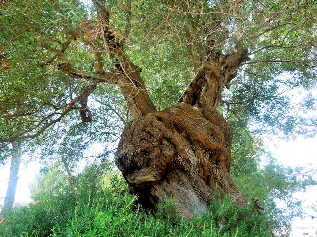 albero,foglie,tronco,erba