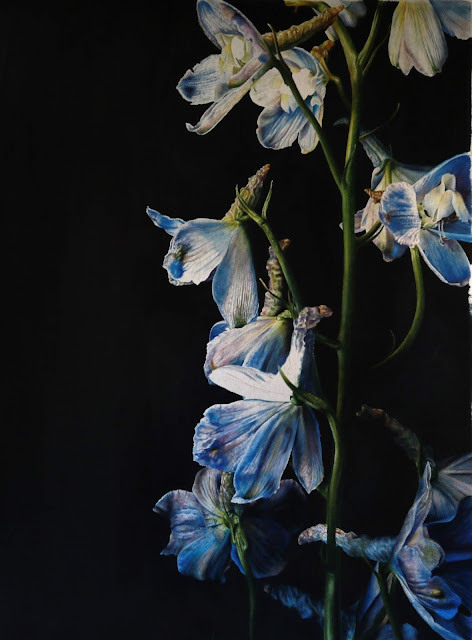 Consolida botanical painting