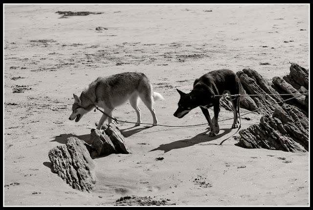 Nova Scotia; Maritimes; Dogs; Risser's Beach