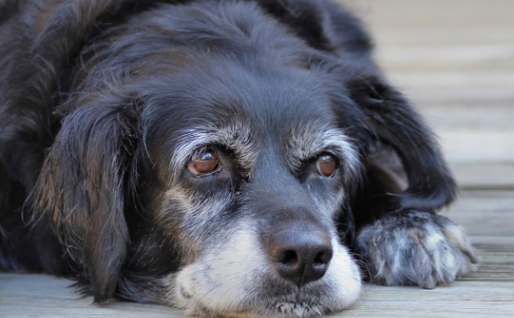 Brain Tumor Symptoms in Dogs