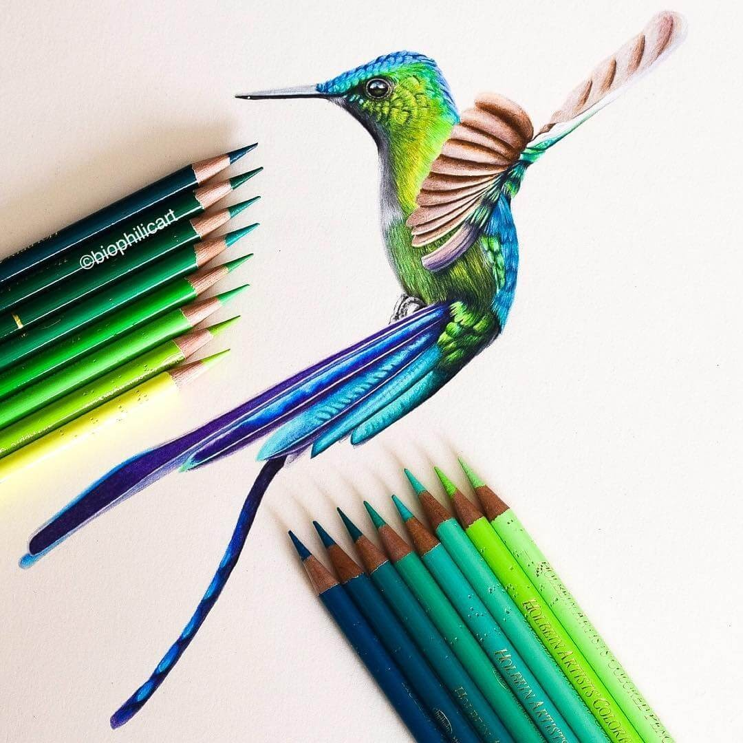 10-Long-tailed-Sylph-Sallyann-Brightly-Colored-Animal-Pencil-Drawings-www-designstack-co