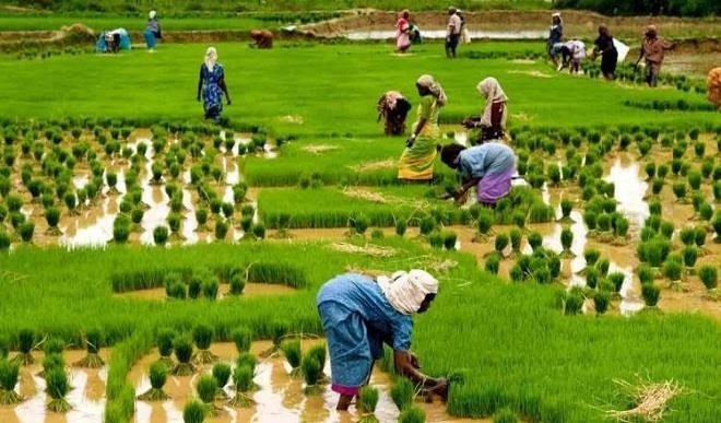 An agricultural expert, Mr Thomas Unongo, has observed that the prolonged absence of rains in Benue could lead to famine as many crops were beginning to wither. Unongo, who is the Director, Agricultural Services, Benue State Ministry of Agriculture and Natural Resources, made the observation in an interview with the News Agency of Nigeria on […]
