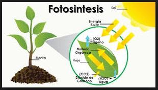 Sebagai materi pembelajaran secara berdikari Contoh Soal IPA Kelas 8 Sekolah Menengah Pertama Tentang Fotosintesis
