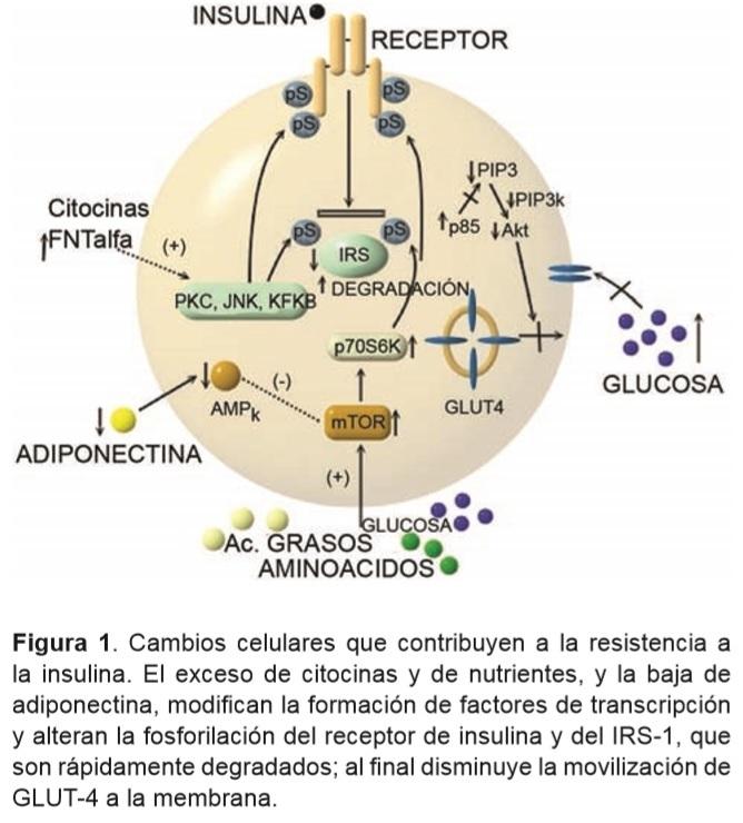 transcripción médica de diabetes