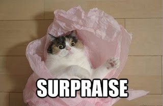 lolcats surprise