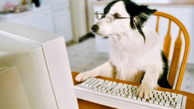 Dog on a pc
