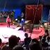 Urso ataca domador em plena apresentação na Rússia