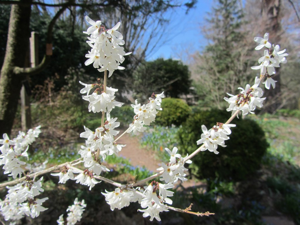 flores blancas y perfumadas en invierno