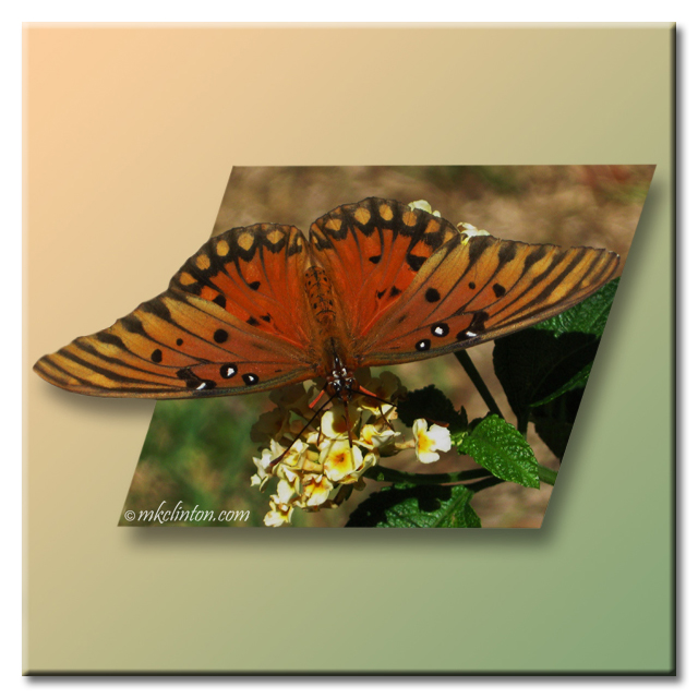 Butterfly on Lantana bush