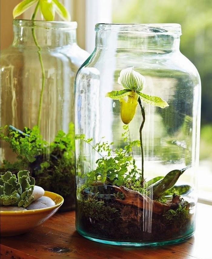 DIY, zrób to sam, inspiracja, pomysł, dekoracja, rośliny, kwiaty, ogród, mini ogród, ogród w słoiku, las w słoiku, ogród w szkle, terrarium garden
