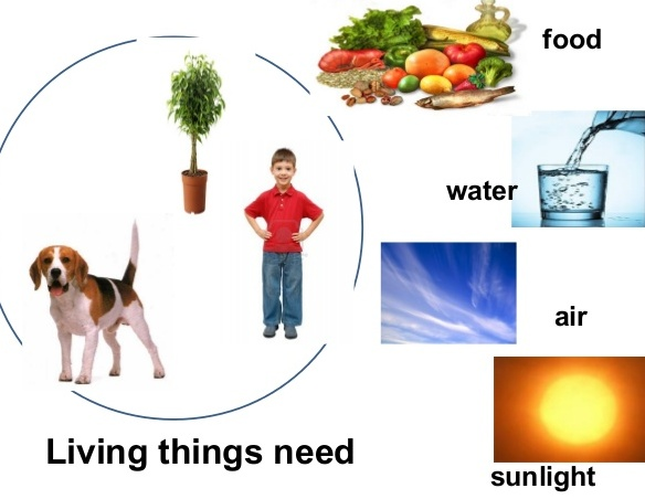 What Do Animals Need To Make Energy From Food
