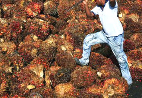 gearing up for tough time in palm oil industry