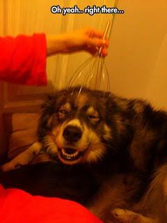 Funny Dog Humor : That feels good..