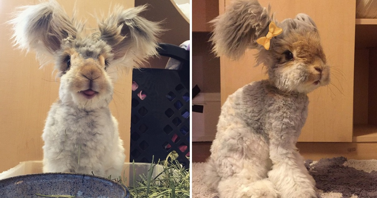 Adorable Pictures Of Wally, The Bunny With The Largest And Cutest Ears We've Ever Seen