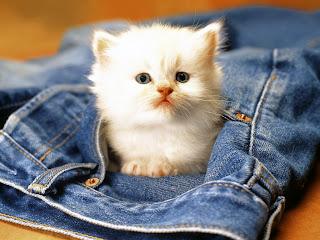 Pisica Mica Si Scumpa Cats Wallpapers Poze Pisici Pisicute Vampirii Energetici Si Donatorii Casei