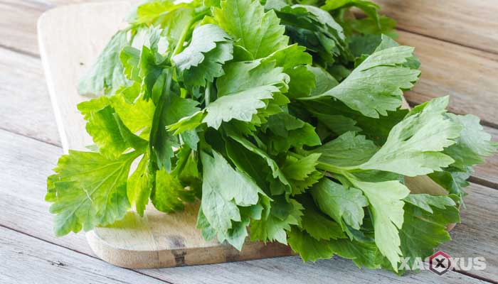 Cara menyembuhkan dan mengobati sariawan dengan daun seledri