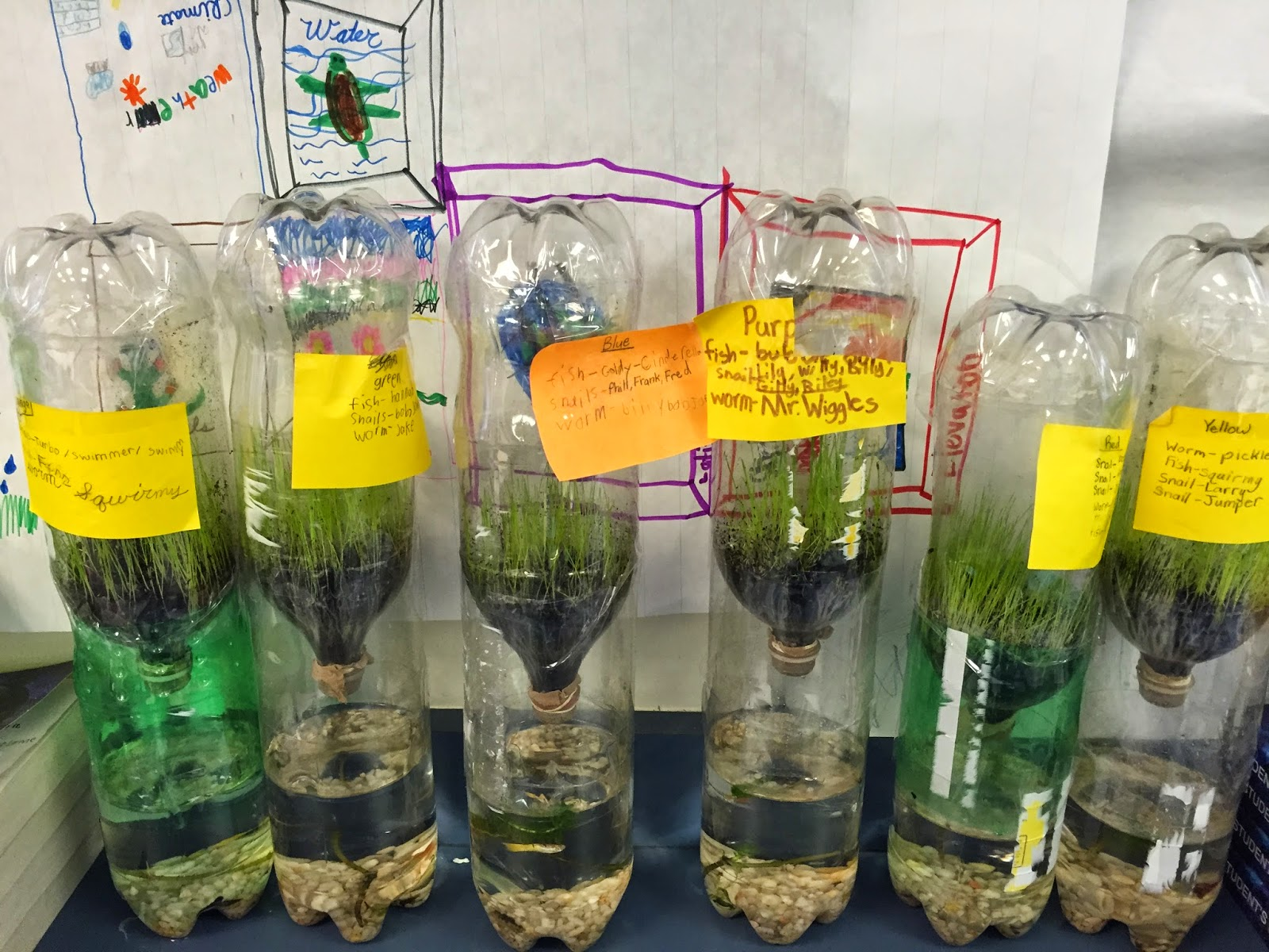 Self Sustaining Ecosystem In A Bottle