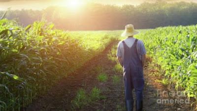Kisah Petani Jagung yang Suka Berbagi