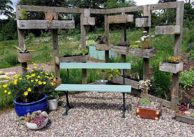 The corner seating area is filling up nicely with early summer colour
