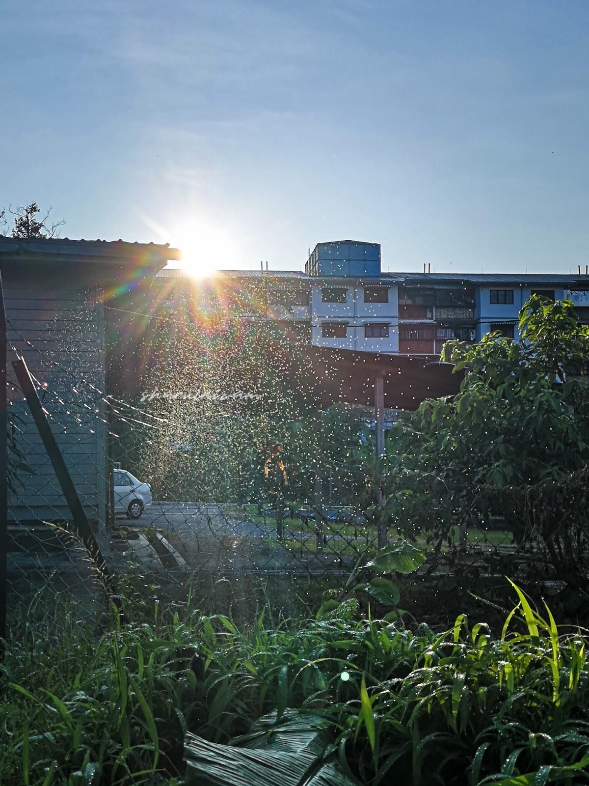 Pagi Sabtu di Pasar Tani Gombak Setia - matahari