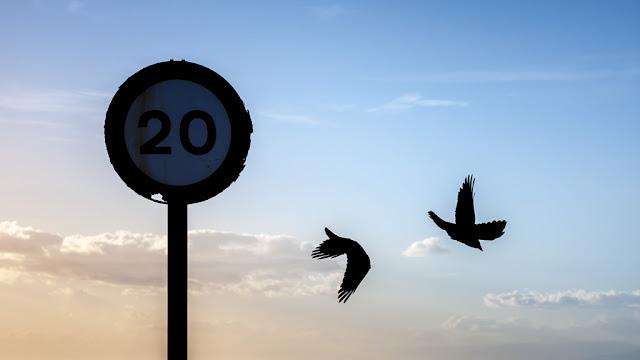 '20 cuervos' por Carlos Larios