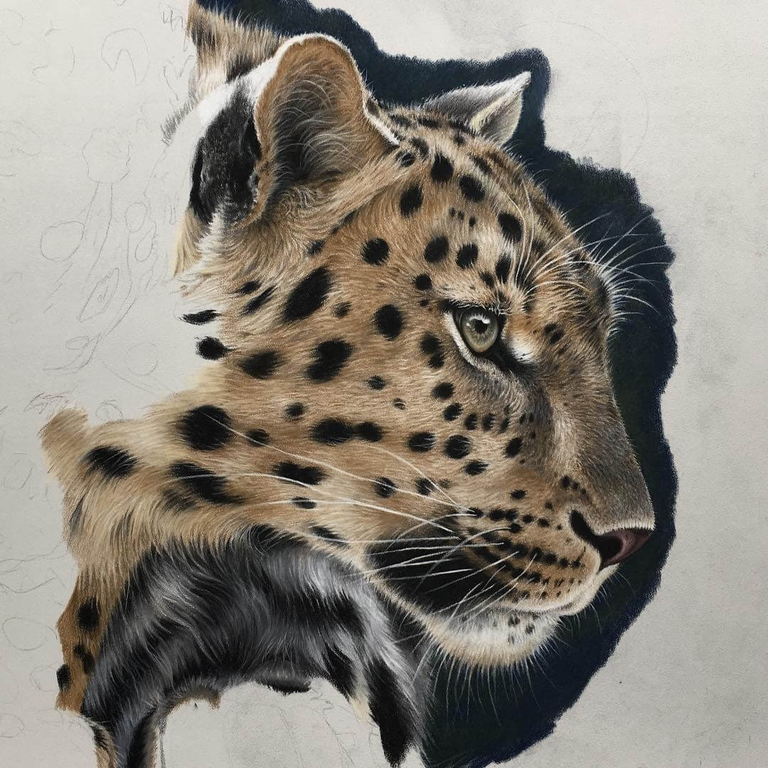 09-Leopard-WIP-Julie-Rhodes-Color-Pencil-Wild-Animal-Drawings-www-designstack-co