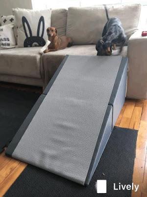rampas para sofá cães
