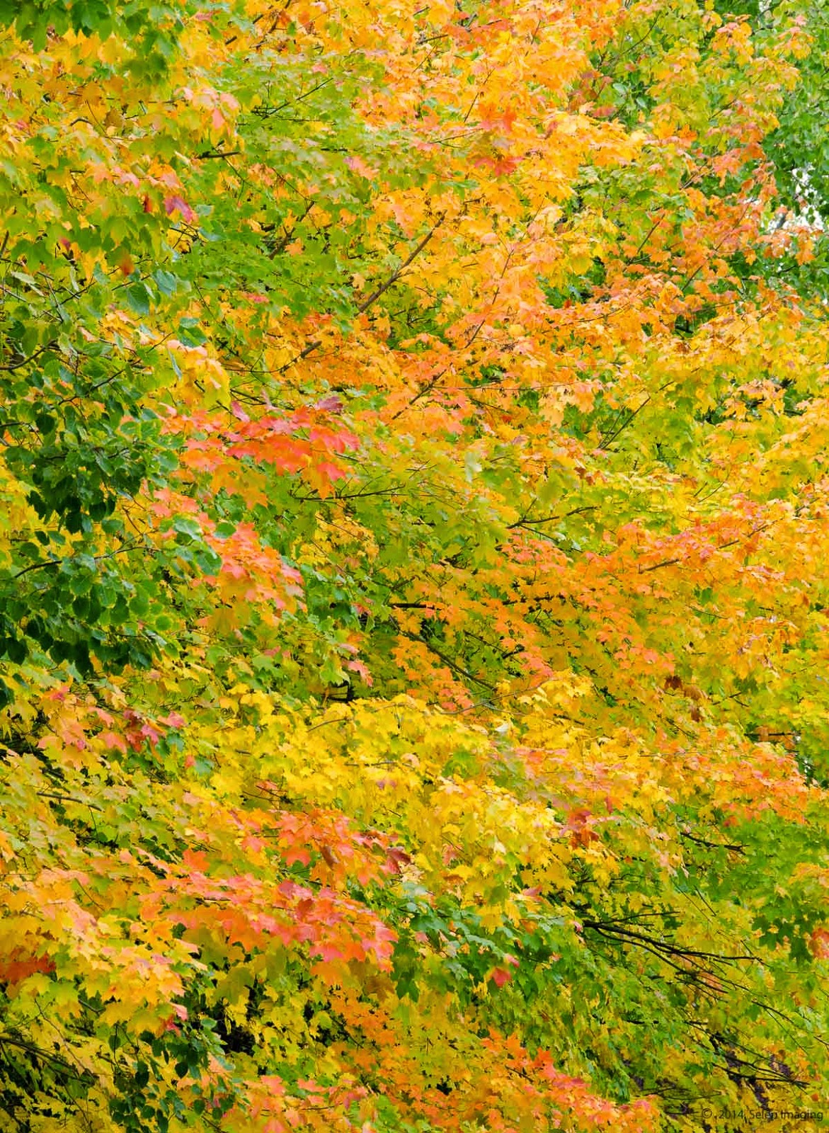 Wisconsin Fall Foliage by Jeanne Selep