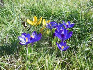 Frühlingserwachen im Lande