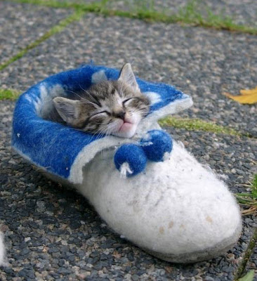 tidur dalam kasut