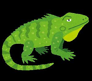 グリーンイグアナのイラスト