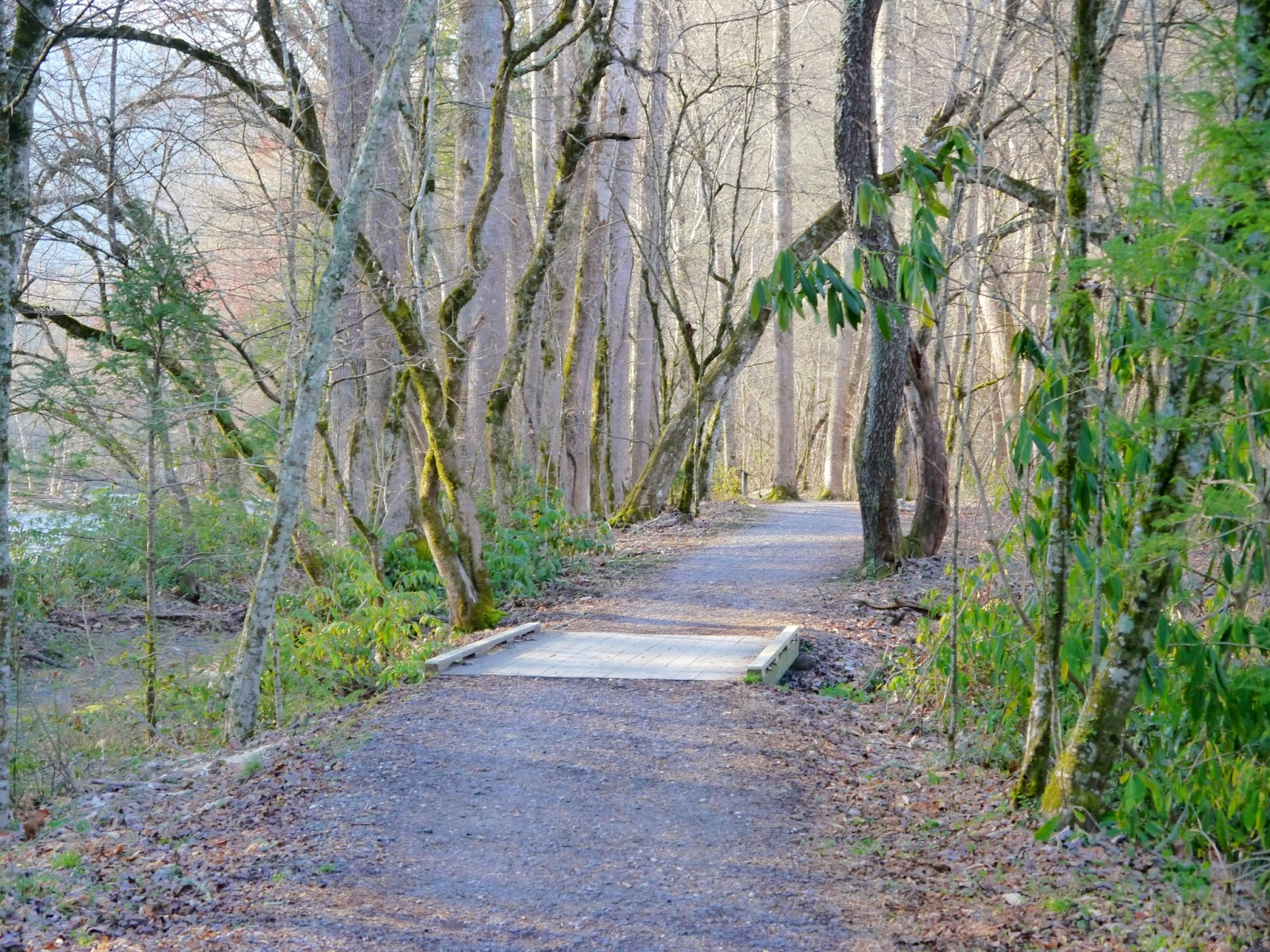 Cherokee For Less >> American Travel Journal: Oconaluftee River Trail - Great Smoky Mountains National Park