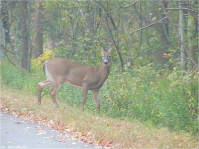 Fauna del Parque Nacional de Acadia, Maine