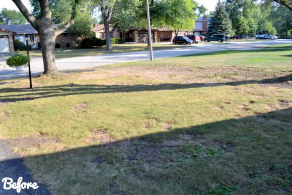 Landscape Makeover- Before